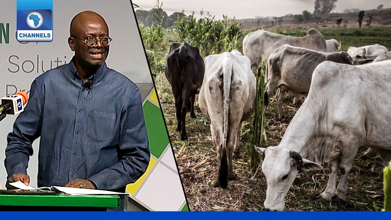 Download Why 'Cow' Is The Most Dangerous Topic In Nigeria Today - Segun Adeniyi