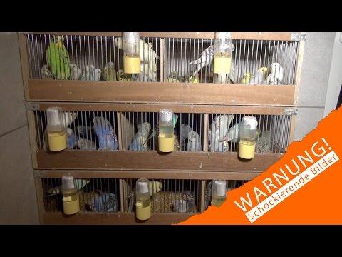 Massenproduktion von Kleintieren für den deutschen Heimtierhandel