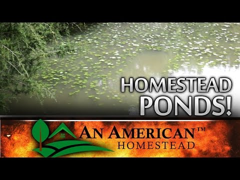 Thumbnail: Your Fishing Pond - THE DIRTY TRUTH!