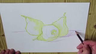 Pears color pencils - Как нарисовать сочные груши цветными карандашами