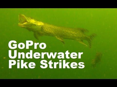 Amazing Northern Pike Attack Underwater Crankbait GoPro