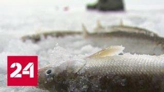 Приморские рыбаки испытывают судьбу на зимней рыбалке - Россия 24