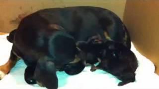 Pimpa e i suoi 7 cuccioli
