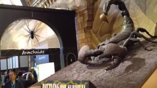 Скорпион в Музее натуральной истории в Лондоне