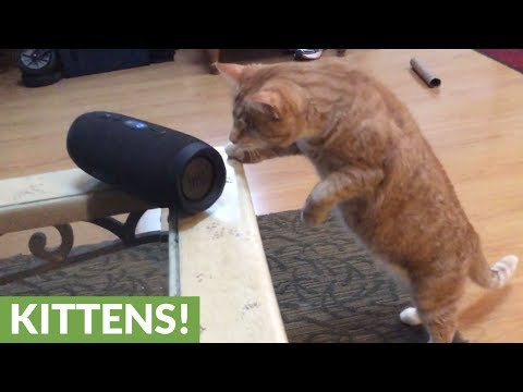 Blind Kitty Has Incredible Reaction To Song Made For Cats