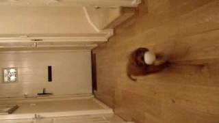 8 Week Old Cocker Spaniel Puppy Ruby Playing Fetch! - David And Diane's Baby