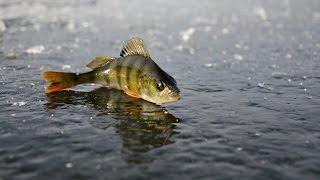 Перволедье...начало зимней рыбалки....а стоит ли начинать...???