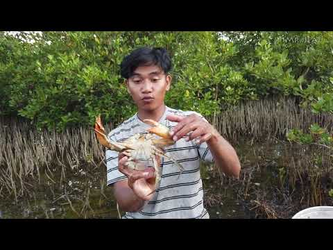 catch-giant-crab-at-the-sea-grass-field-after-water-go-down-|-catch-crab-by-hand