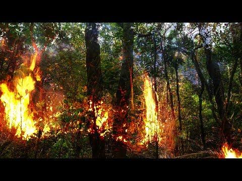 Langzeitschäden nach Amazonasbränden