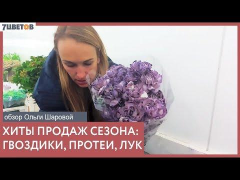 Супер-хит сезона - гвоздика Лайт Молли, аллиум и протеи / Обзор срезанных цветов с Ольгой Шаровой