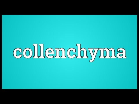 Header of collenchyma