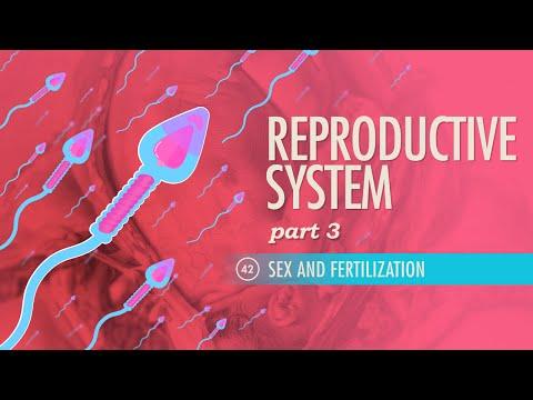 sex fertilization