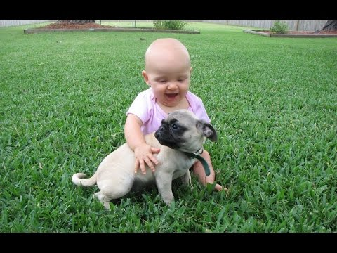 Funny Pug and Baby Video - Funny Baby and Dogs Compilation (2017)