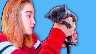 Света, Богдан и маленький котенок Лайк. Веселые истории с котом.