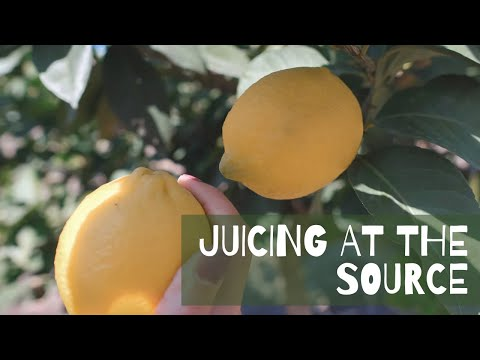 PUR Cold Pressed Juice - Learn about Juicing at the source and our Most Popular Juice Cleanse