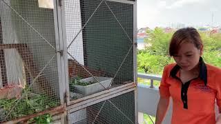 Iguana House . Hướng Dẫn Các Bạn Nữ Cho Iguana Ăn ( How Can a girl take care iguana )