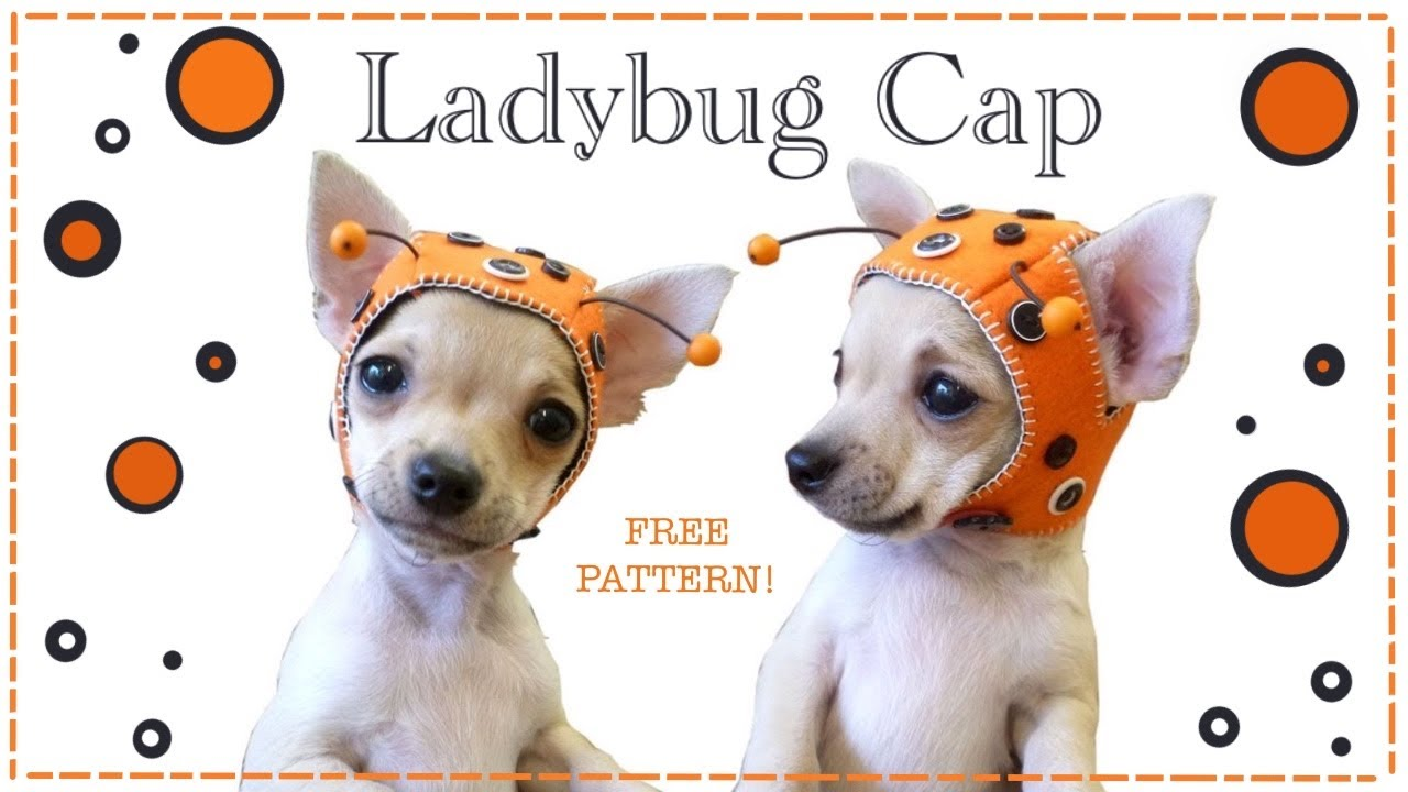 Free Knitting Patterns For Very Small Dogs : Ladybug cap for Chihuahua Puppy FREE PATTERN with Lisa Pay ...