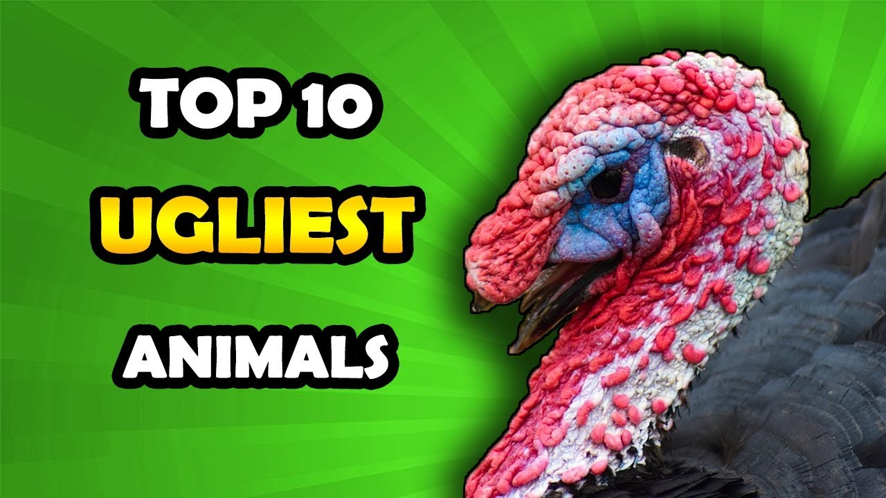 Top 10 Ugliest Animals In The World! Must See! - YouTube