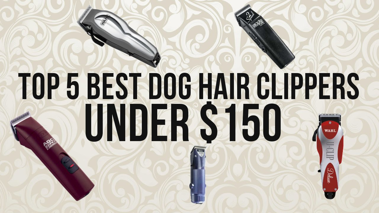 image of best dog grooming clippers