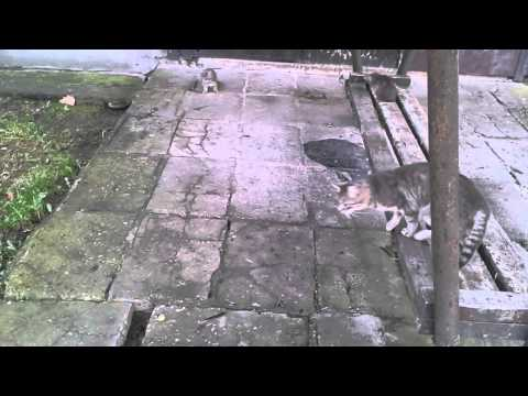 Funny Kittens Playing Jumping Scratching and a Mother Cat Part 1