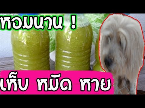แชร์สูตรแชมพูสุนัขสูตรหอมนาน เห็บ หมัดหายแก้ปัญหาโรคผิวหนังได้ดี l love dog (แก้ไขแล้วค่า)