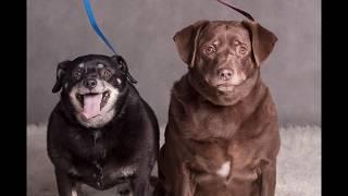 Szukamy domu dla psiaków Gusi i Pusi