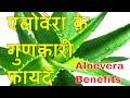 एलोवेरा के फायदे || Benefits of Aloevera