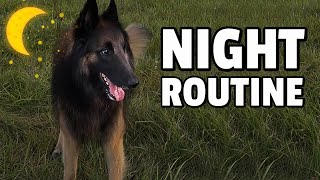 Night Routine with my Belgian Shepherd Dog | Our Typical Friday
