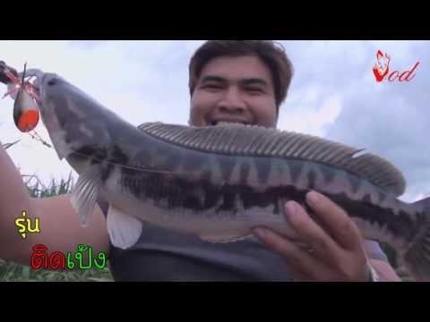ตกปลาชะโดแม่น้ำท่าจีน