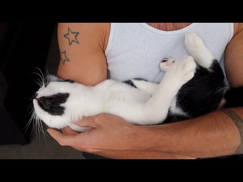 How attached are cats to their owners?