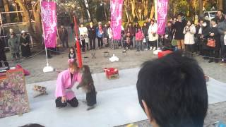 Awesome Show Monkey in Tokyo, Japan