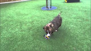 Dogs Trust Manchester - Bonnie