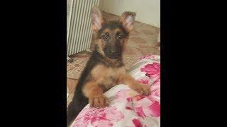 Моя собака - Юта
