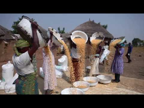 Think Ghana Series: Agriculture Sector | 2015