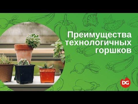 Бонсай Защитное древо купить в Киеве, цена в Украине