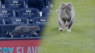 Cat on the field, a breakdown