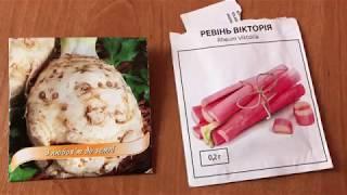 видео Технология выращивания азарины