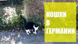 Германия. Кошки, гуляющие сами по себе. Есть ли в Германии бездомные животные? Cats ВЛОГ, VLOG