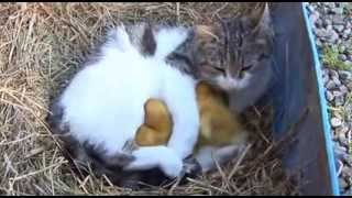 Кошка, котята и утята