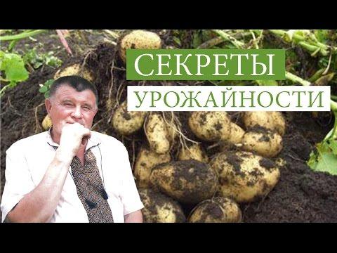 Как подготовить почву под картофель осенью