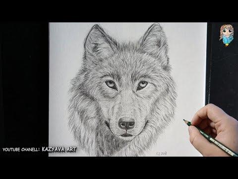 Как нарисовать мордочку волка