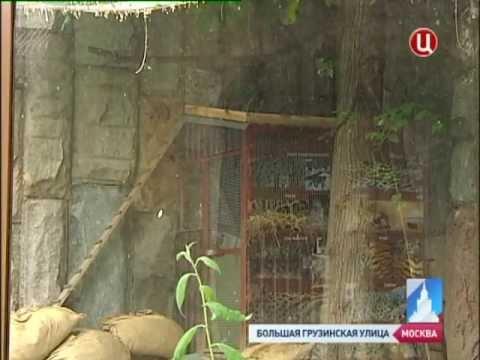 В Московском зоопарке родились детеныши манула