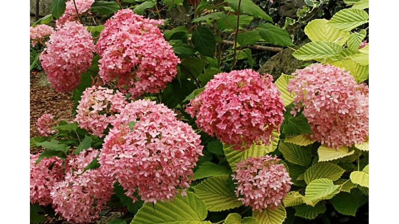 Peque os rboles y arbustos del jard n youtube for Arbustos jardin pequeno