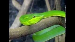 Costa Rica, Mittelamerika