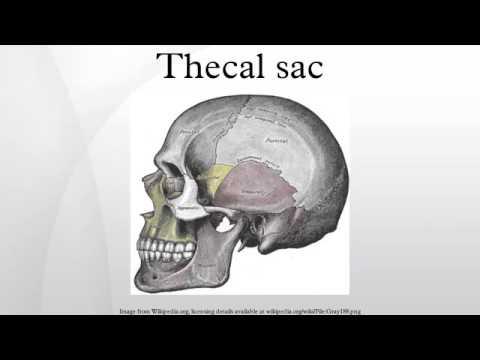 Thecal sac - YouTube