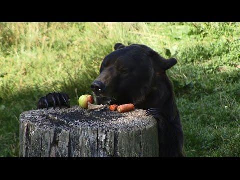 Stiftung der Sparkasse Bielefeld - Mein erster Tag im Tierpark Olderdissen