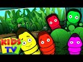 Five Little Caterpillars Five Little Series Kids Tv Nursery Rhymes mp3