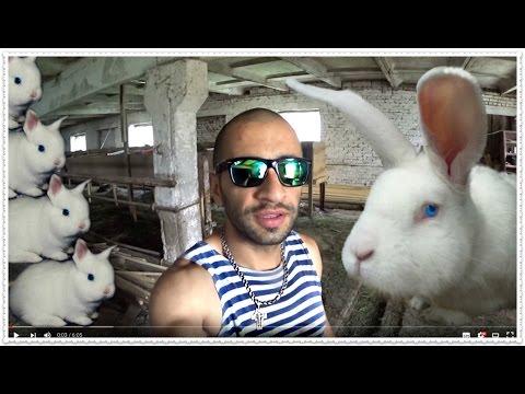 Кролики великаны детеныши - БИЗНЕС КРОЛИКОВОДСТВО ФЕРМА + Как заработать денег быстро Уфа