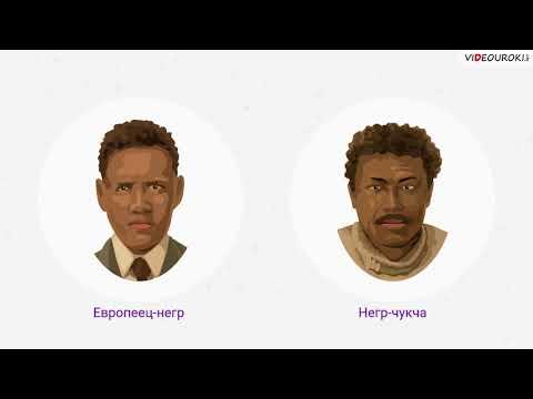 Как появились расы видео