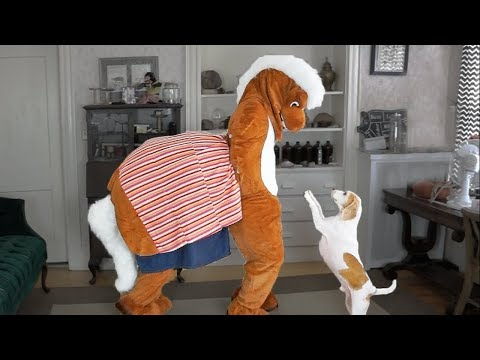 Dog vs Horse Prank: Funny Dog Maymo